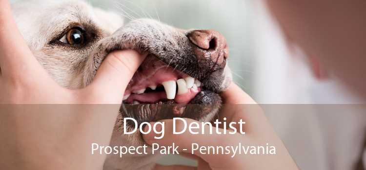 Dog Dentist Prospect Park - Pennsylvania