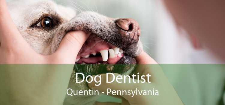 Dog Dentist Quentin - Pennsylvania
