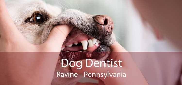 Dog Dentist Ravine - Pennsylvania