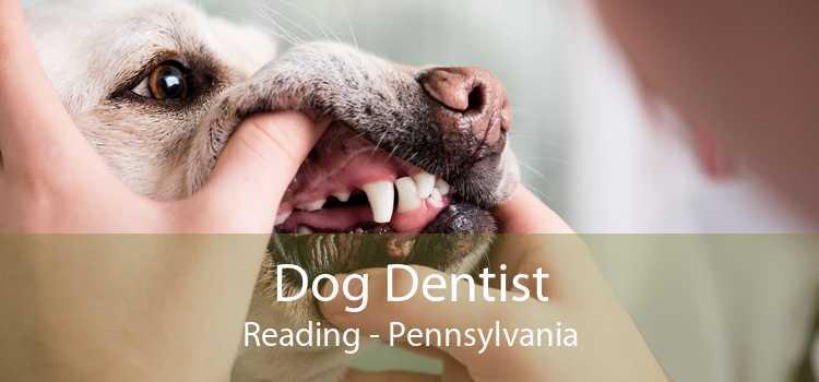 Dog Dentist Reading - Pennsylvania