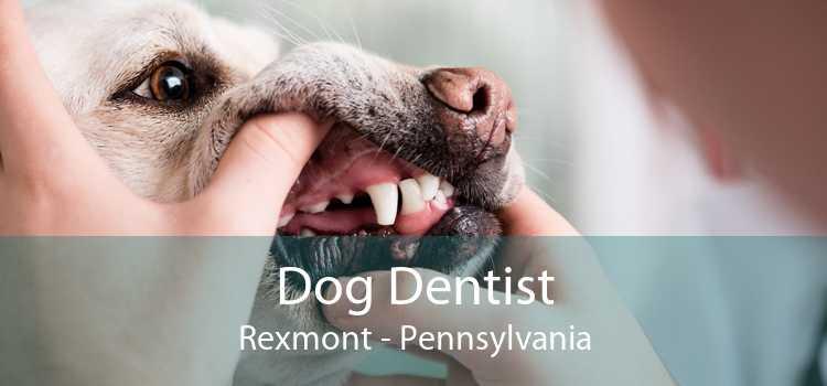 Dog Dentist Rexmont - Pennsylvania