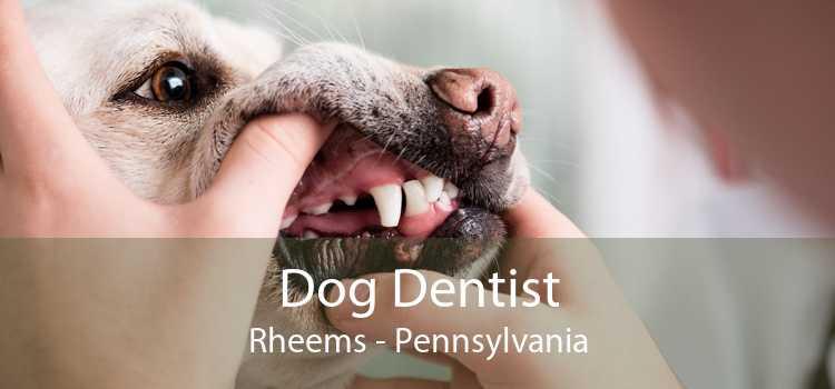 Dog Dentist Rheems - Pennsylvania