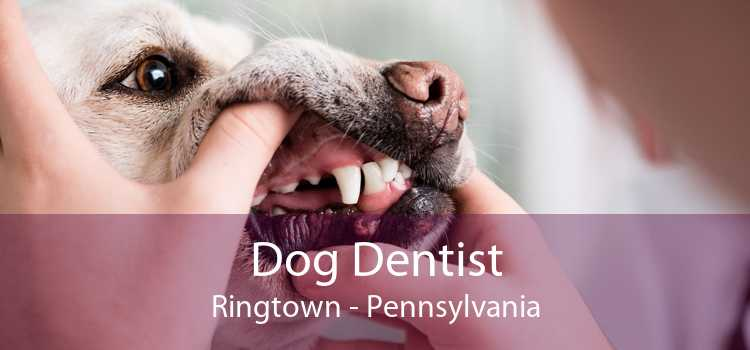 Dog Dentist Ringtown - Pennsylvania