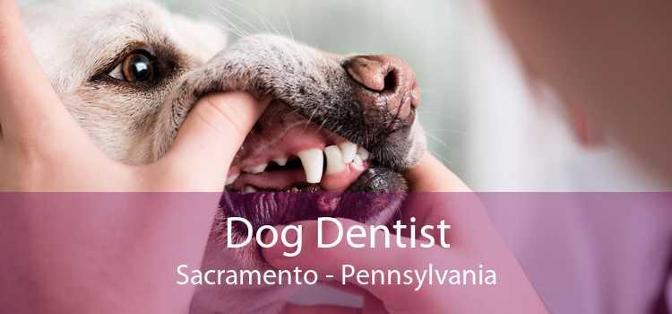 Dog Dentist Sacramento - Pennsylvania