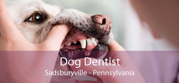 Dog Dentist Sadsburyville - Pennsylvania