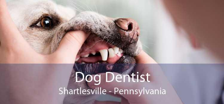 Dog Dentist Shartlesville - Pennsylvania