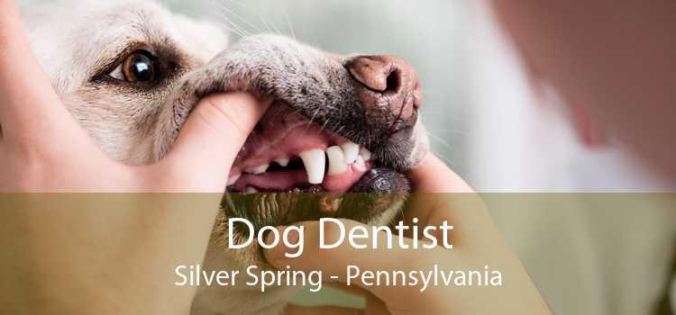 Dog Dentist Silver Spring - Pennsylvania