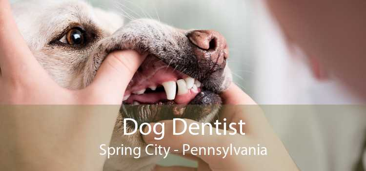 Dog Dentist Spring City - Pennsylvania