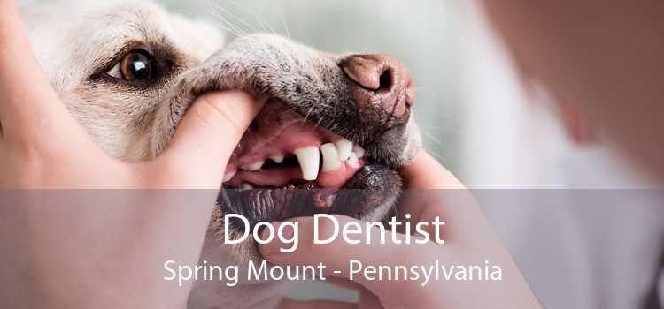 Dog Dentist Spring Mount - Pennsylvania