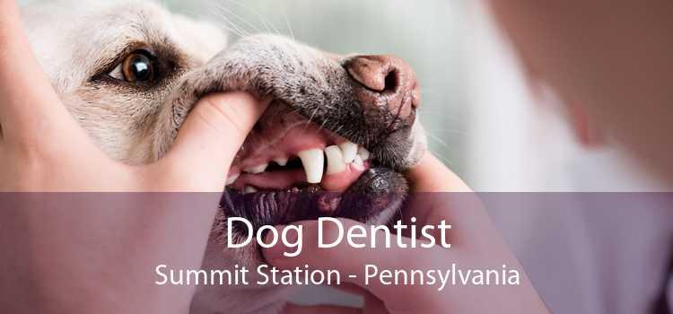 Dog Dentist Summit Station - Pennsylvania