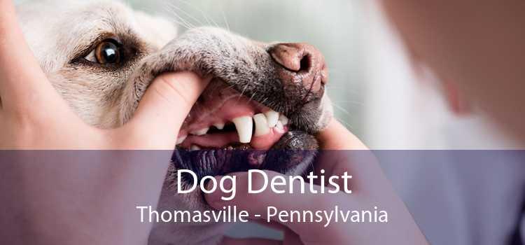 Dog Dentist Thomasville - Pennsylvania