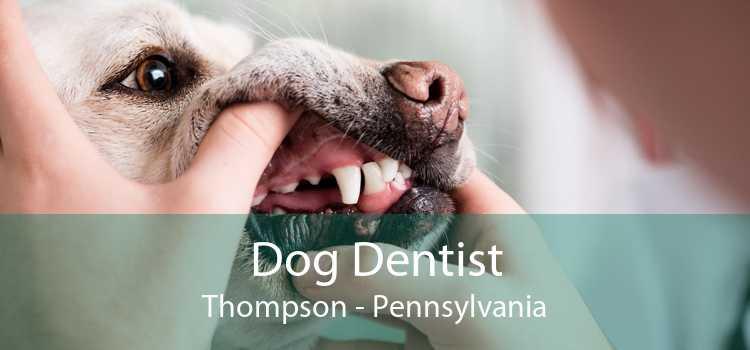 Dog Dentist Thompson - Pennsylvania