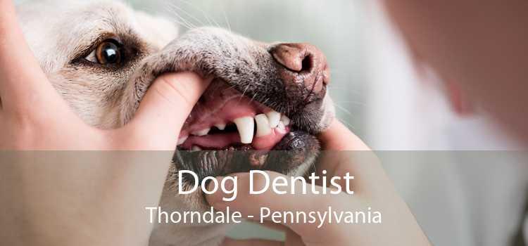 Dog Dentist Thorndale - Pennsylvania