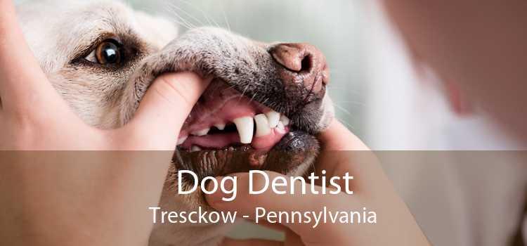 Dog Dentist Tresckow - Pennsylvania
