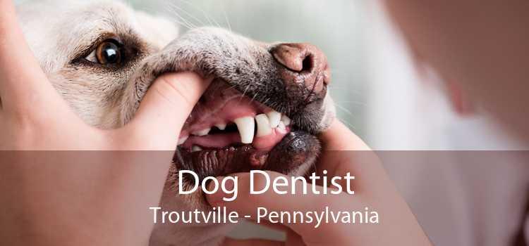 Dog Dentist Troutville - Pennsylvania