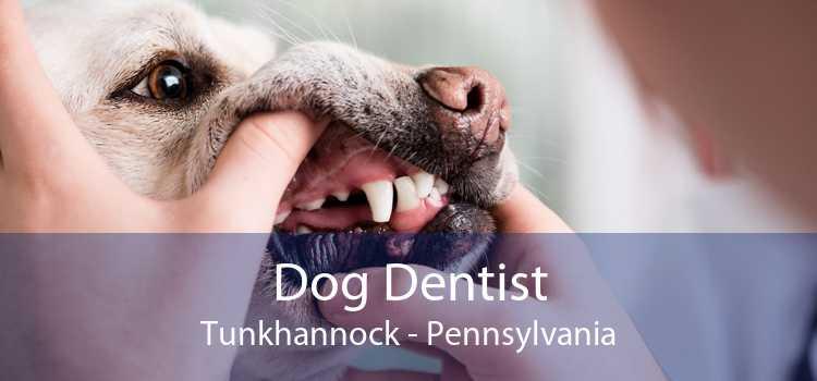 Dog Dentist Tunkhannock - Pennsylvania