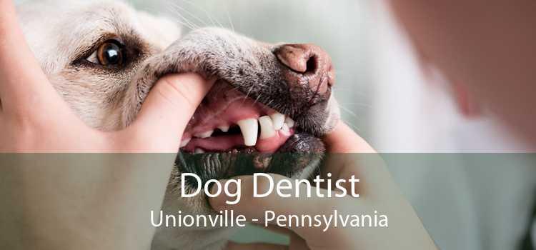 Dog Dentist Unionville - Pennsylvania