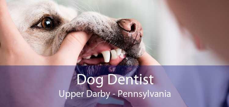 Dog Dentist Upper Darby - Pennsylvania