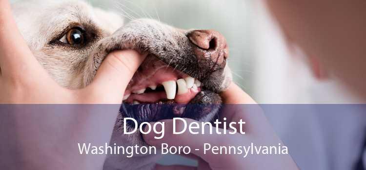 Dog Dentist Washington Boro - Pennsylvania