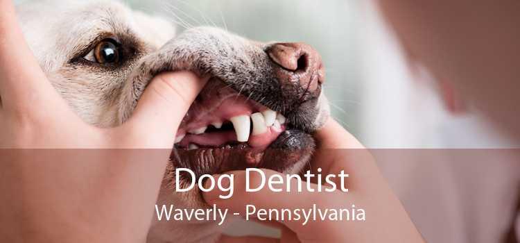 Dog Dentist Waverly - Pennsylvania