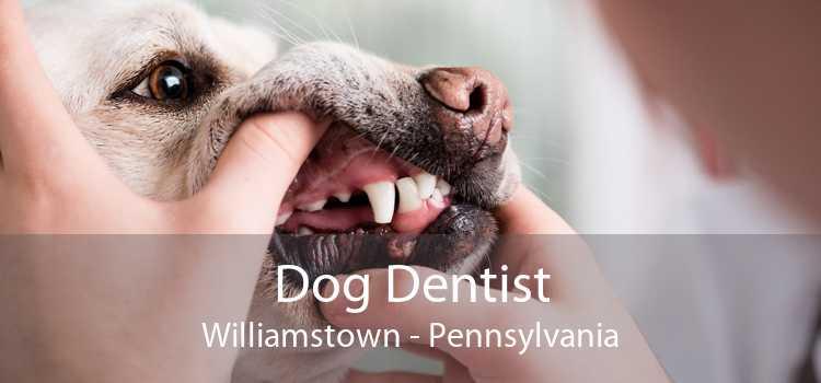 Dog Dentist Williamstown - Pennsylvania