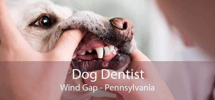 Dog Dentist Wind Gap - Pennsylvania