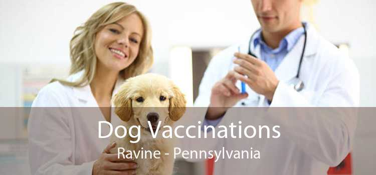 Dog Vaccinations Ravine - Pennsylvania