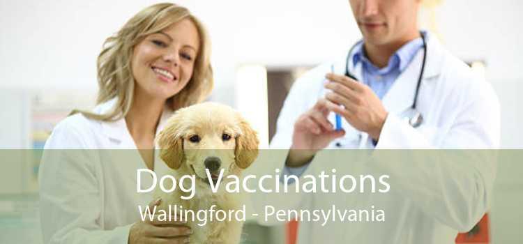 Dog Vaccinations Wallingford - Pennsylvania