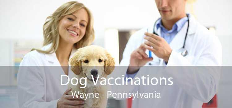 Dog Vaccinations Wayne - Pennsylvania