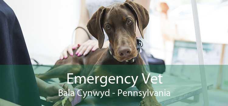 Emergency Vet Bala Cynwyd - Pennsylvania