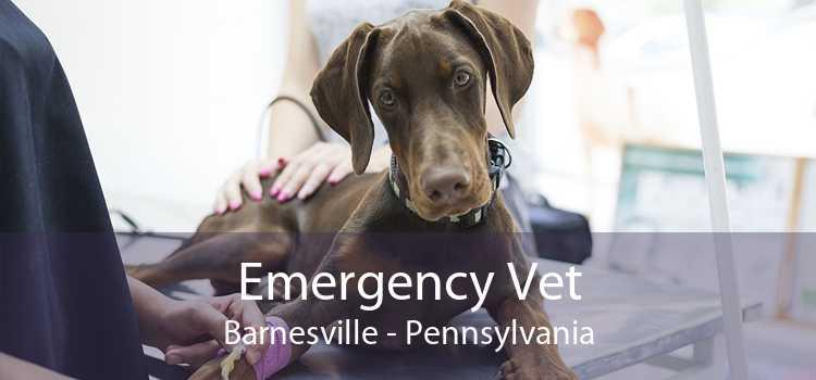Emergency Vet Barnesville - Pennsylvania