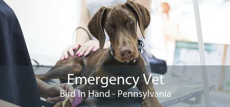 Emergency Vet Bird In Hand - Pennsylvania