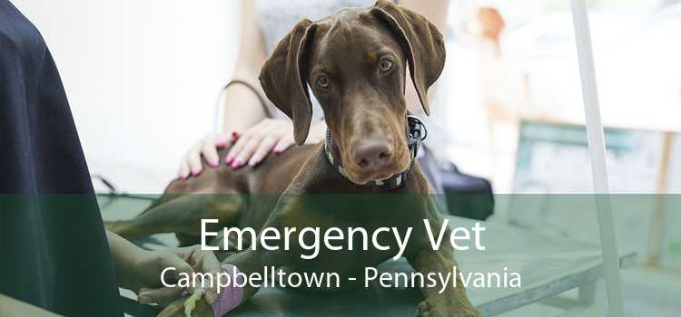 Emergency Vet Campbelltown - Pennsylvania