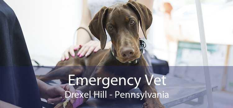 Emergency Vet Drexel Hill - Pennsylvania