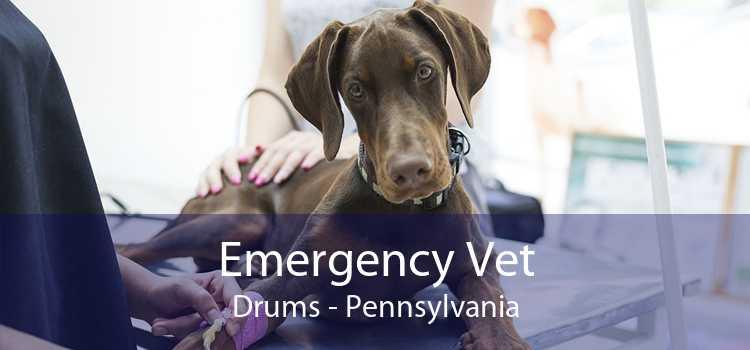 Emergency Vet Drums - Pennsylvania