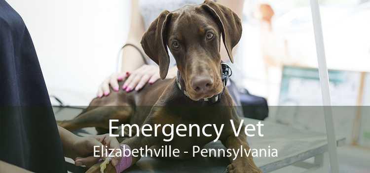 Emergency Vet Elizabethville - Pennsylvania