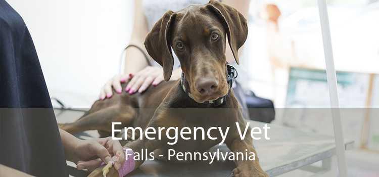 Emergency Vet Falls - Pennsylvania
