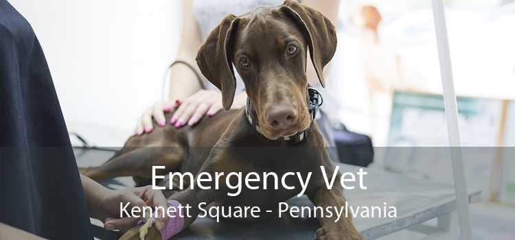 Emergency Vet Kennett Square - Pennsylvania