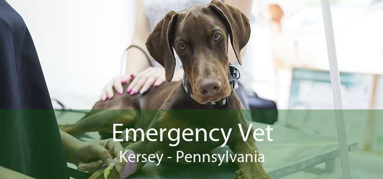 Emergency Vet Kersey - Pennsylvania