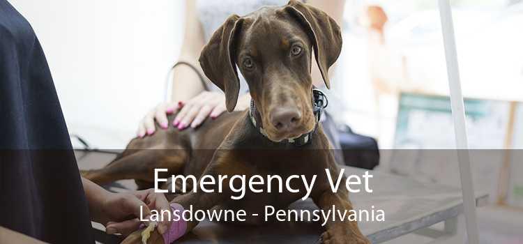 Emergency Vet Lansdowne - Pennsylvania