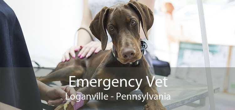 Emergency Vet Loganville - Pennsylvania