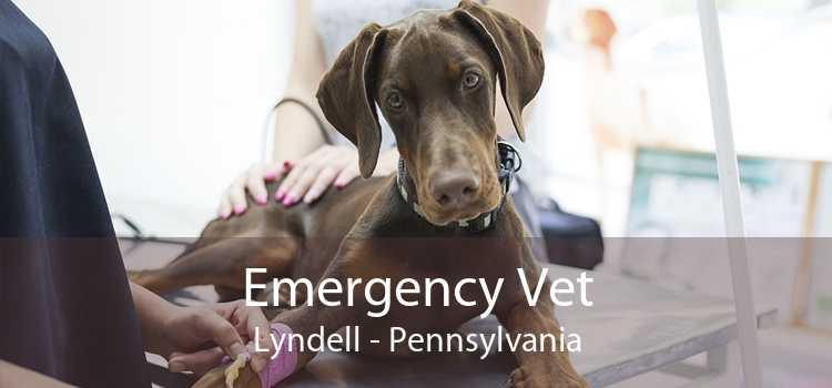 Emergency Vet Lyndell - Pennsylvania