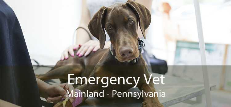 Emergency Vet Mainland - Pennsylvania