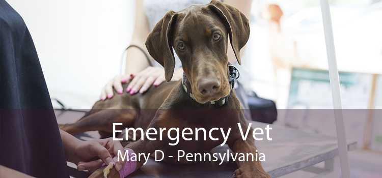 Emergency Vet Mary D - Pennsylvania