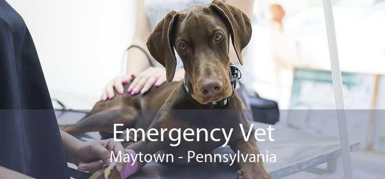 Emergency Vet Maytown - Pennsylvania