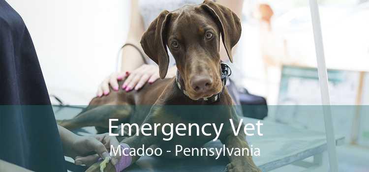 Emergency Vet Mcadoo - Pennsylvania