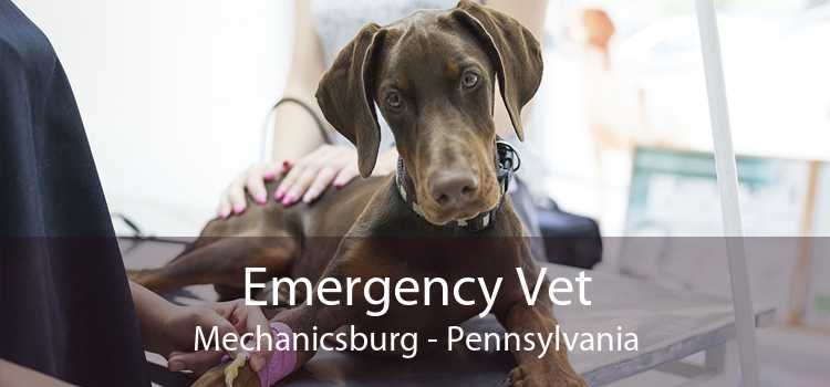 Emergency Vet Mechanicsburg - Pennsylvania