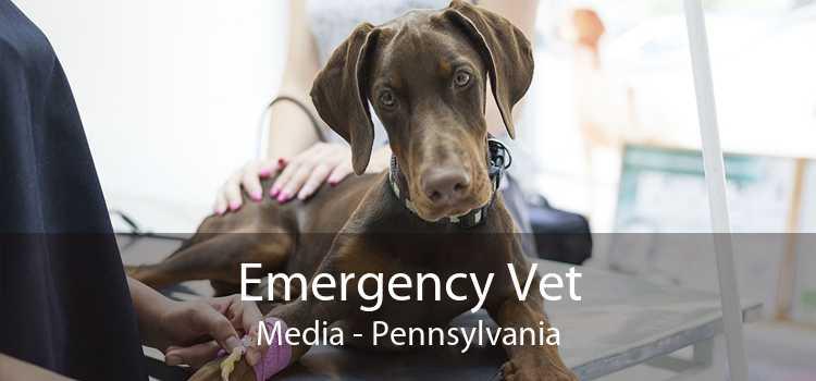 Emergency Vet Media - Pennsylvania