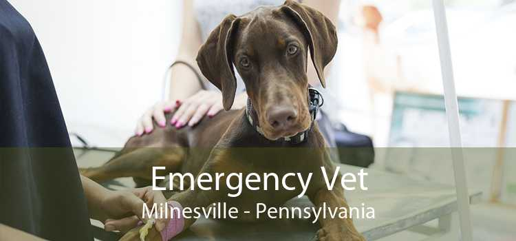 Emergency Vet Milnesville - Pennsylvania