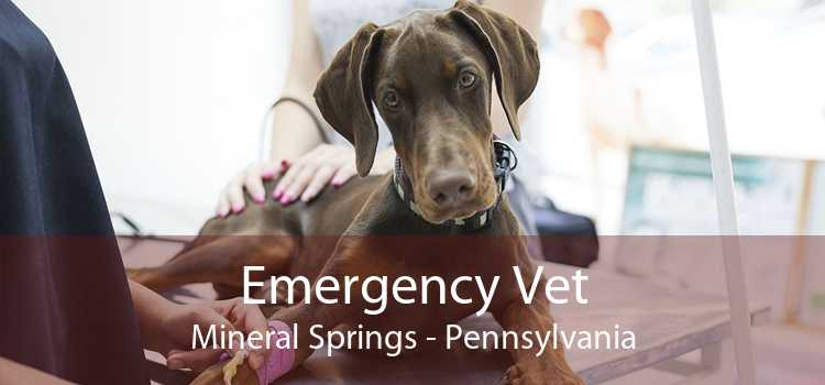 Emergency Vet Mineral Springs - Pennsylvania